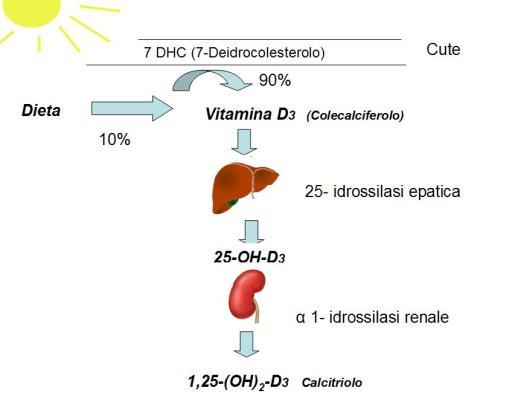 vitamina-d_metabolismo-dietista-benacchio