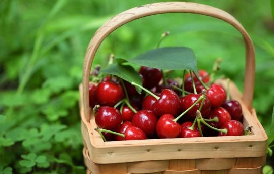 ciliegie-proprieta-nutritive-dietista benacchio
